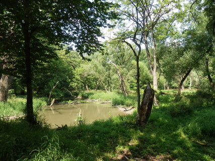 FOTKA - Lužní lesy při záplavách pookřejí - pro ně je pravidelná závlaha nutností - obora Soutok jižně od Břeclavi