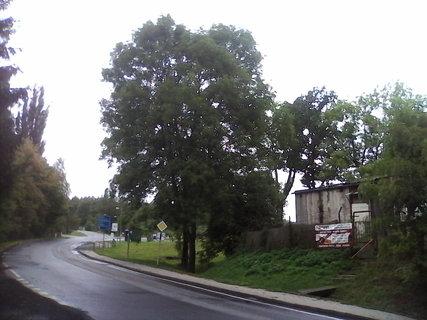 FOTKA - usychajici stromy 2