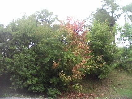 FOTKA - podzim 3