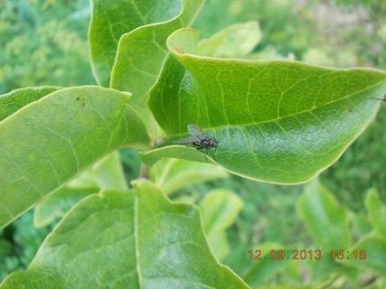 FOTKA - 13.9. - 10.9. - 18 - moucha na listě