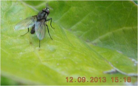 FOTKA - 13.9. - 10.9. - 19 - moucha na listě