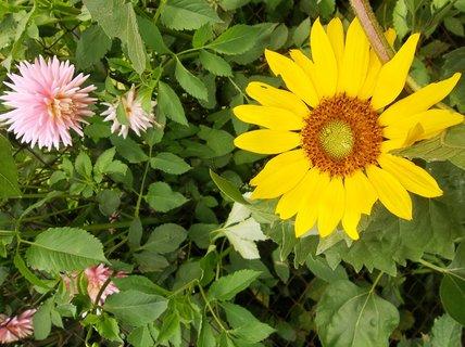 FOTKA - září na zahradě...