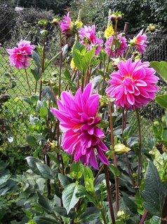 FOTKA - září na zahradě. ..