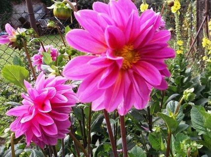 FOTKA - září na zahradě ...