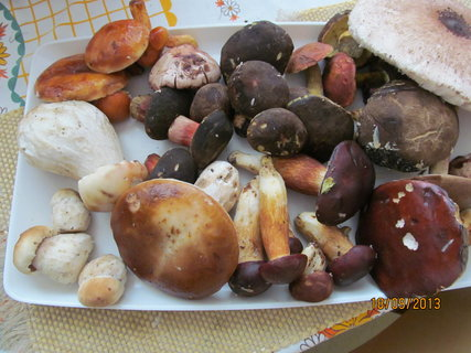 FOTKA - Včerejší houby