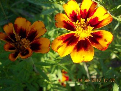 FOTKA - 15.9. -13.9. - 9 - jeden květ ve stínu a druhý na slunci