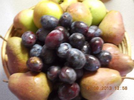FOTKA - 15.9. - 5 - ovoce