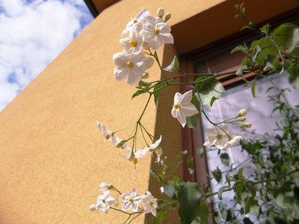 FOTKA - kvetou na okně.