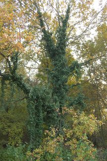 FOTKA - zarostly strom