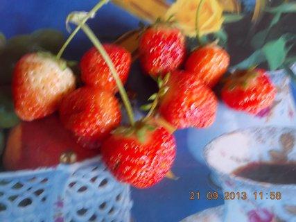 FOTKA - 21.9. - 19.9. - 16 - dalších pár jahod