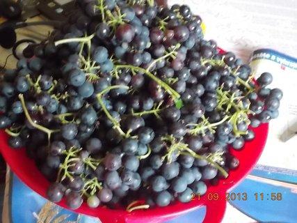 FOTKA - 21.9. - 19.9. - 17 - mísa hroznového vína
