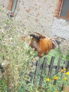 FOTKA - 21.9. - 19.9. - 21 - Pepo a šup na velkou zahradu, tady mi nehrab