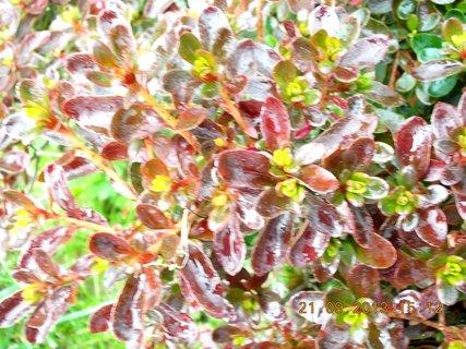 FOTKA - 21.9. - 19.9. - 24 - podzimn� barvy na Azalce