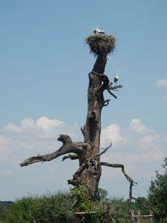 FOTKA - vzpomínky na prázdniny - čapí hnízda na Břeclavsku