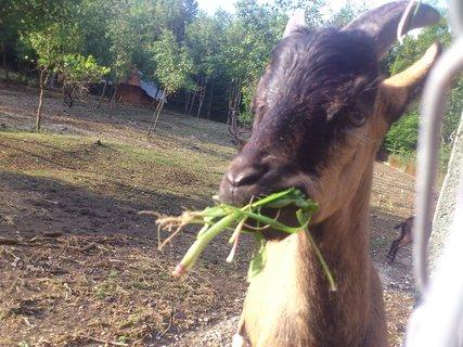 FOTKA - Dančí obora i s kozami 7