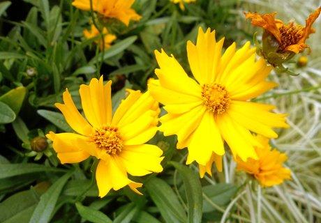 FOTKA - žluté květy ..