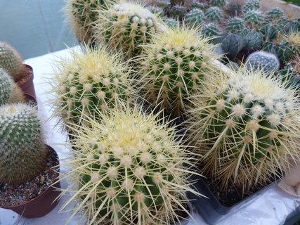 FOTKA - kaktusy.