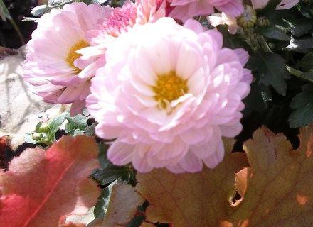 FOTKA - barvy podzimu . ..