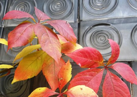 FOTKA - barvy podzimu .. .