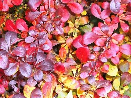 FOTKA - barvy podzimu...