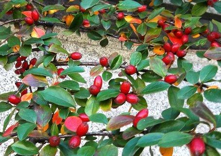 FOTKA - barvy podzimu. ...