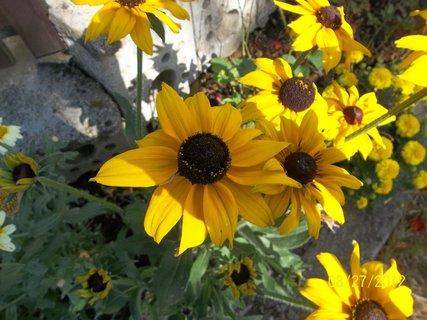 FOTKA - barvy podzimu..2