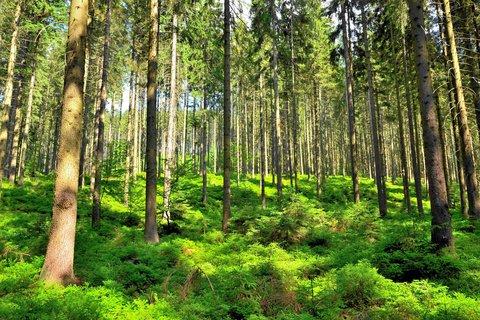 FOTKA - Prosluněný les