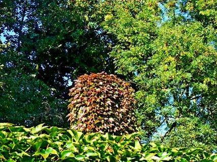 FOTKA - příroda361