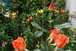 poupata mezi liliemi