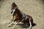 důvěra mezi koněm a jezdcem