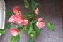 .květina