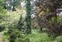 arboretum Bílá Lhota - 13