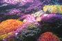 podmořský svět 4