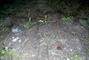 zila sadrovce,na Stribrnem jezere alias Sadraku