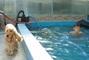 Péťa v bazénu,,,