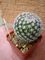 Můj nový kaktus