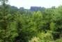 lesík u nás