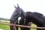 Slatiňany-koně
