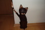 Drevená mačka -narodeninový darček