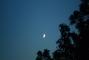 Měsíček
