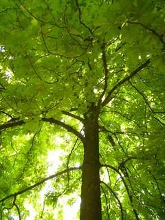 FOTKA - strom.
