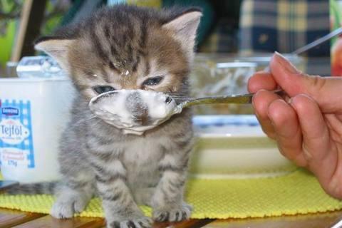 FOTKA - Malé koťátko