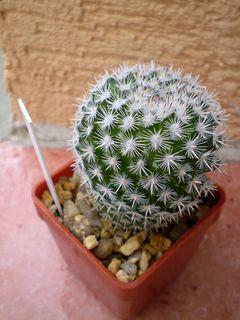 FOTKA - Můj nový kaktus