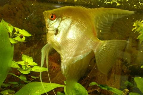 FOTKA - Král našeho akvaria