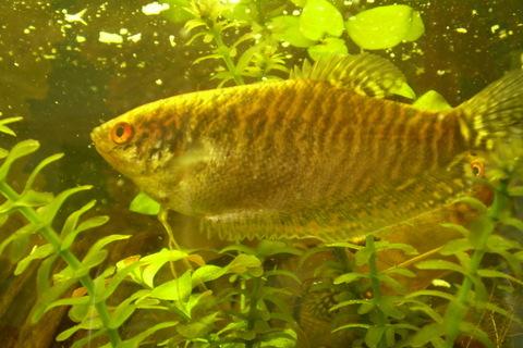 FOTKA - Babičin rybák