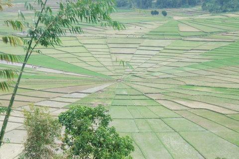FOTKA - rýžová pole