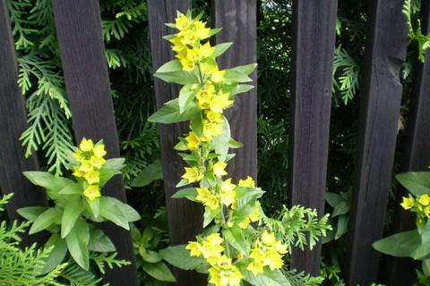 FOTKA - Kyti u plotu