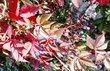 barvy podzimu.. 6
