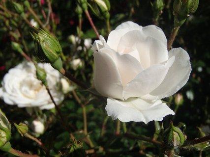 FOTKA - 04.10.2013 biela kráska
