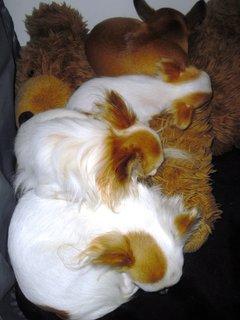 FOTKA - Naši mazlíci když spí :)